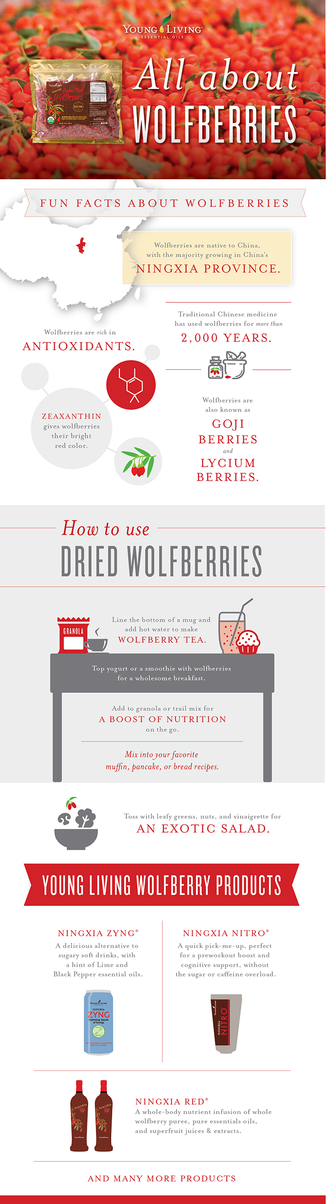 Fun facts about wolfberries infographic